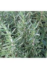 Seed Savers Herb - Rosemary