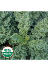 Seed Savers Kale - Dwarf Blue Scotch