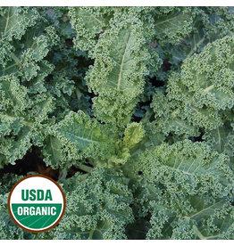 Seed Savers Kale - Dwarf Blue Curled
