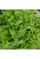 Seed Savers Lettuce - Baby Oakleaf
