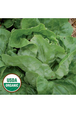 Seed Savers Lettuce - Ella Kropf