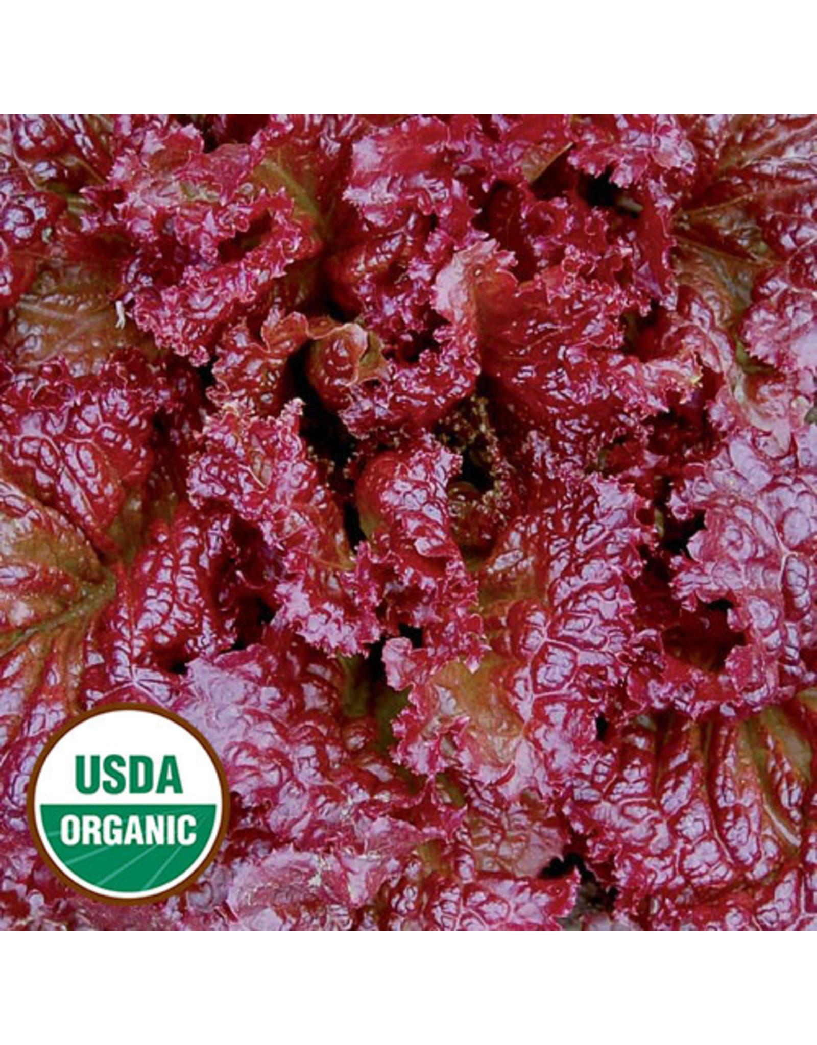Seed Savers Lettuce - Red Velvet