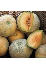 Seed Savers Melon - Minnesota Midget