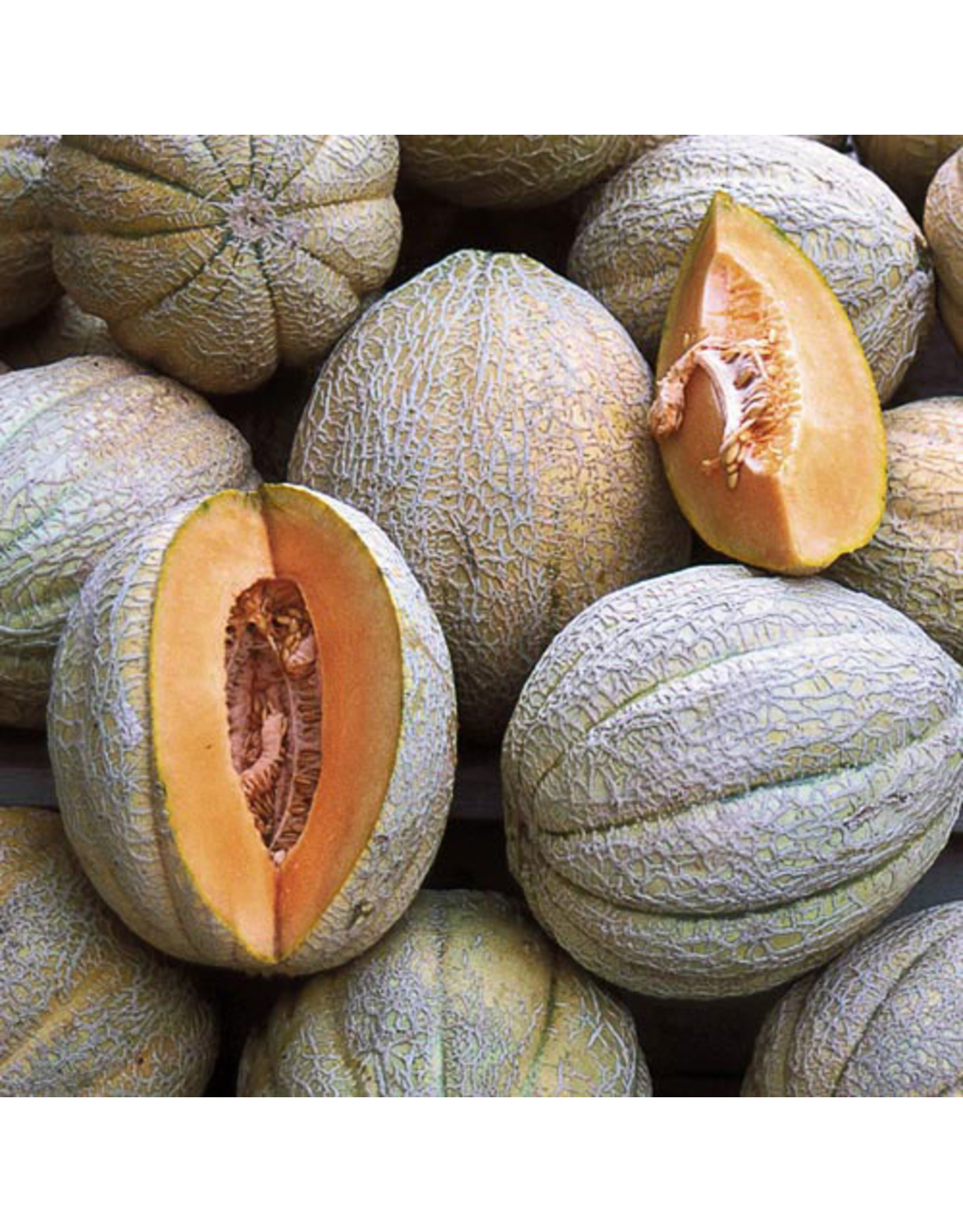 Seed Savers Melon - Pride of Wisconsin