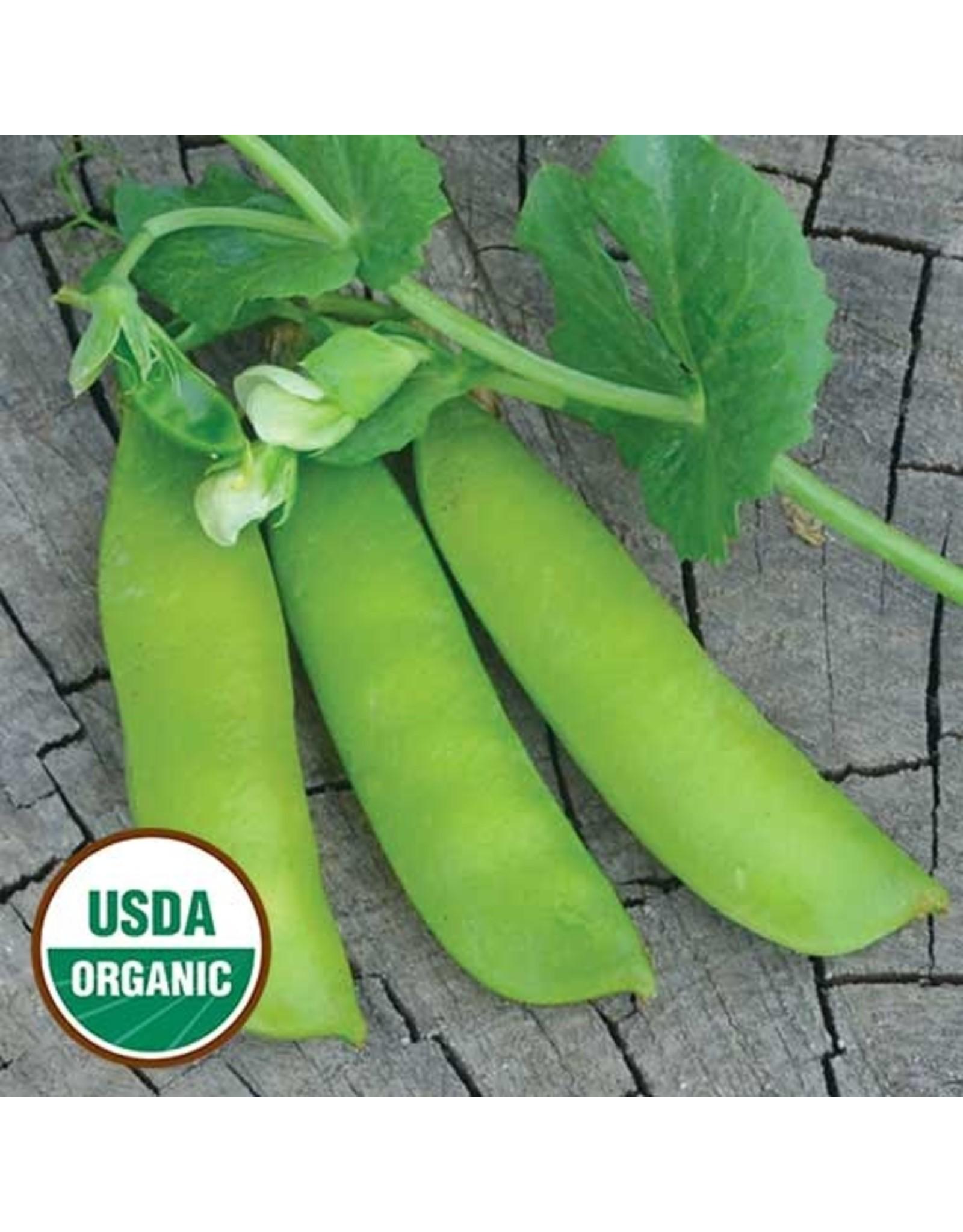 Seed Savers Pea - British Wonder
