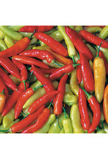 Seed Savers Pepper - Aji Cristal