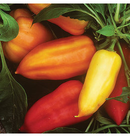 Seed Savers Pepper - Feher Ozon Paprika