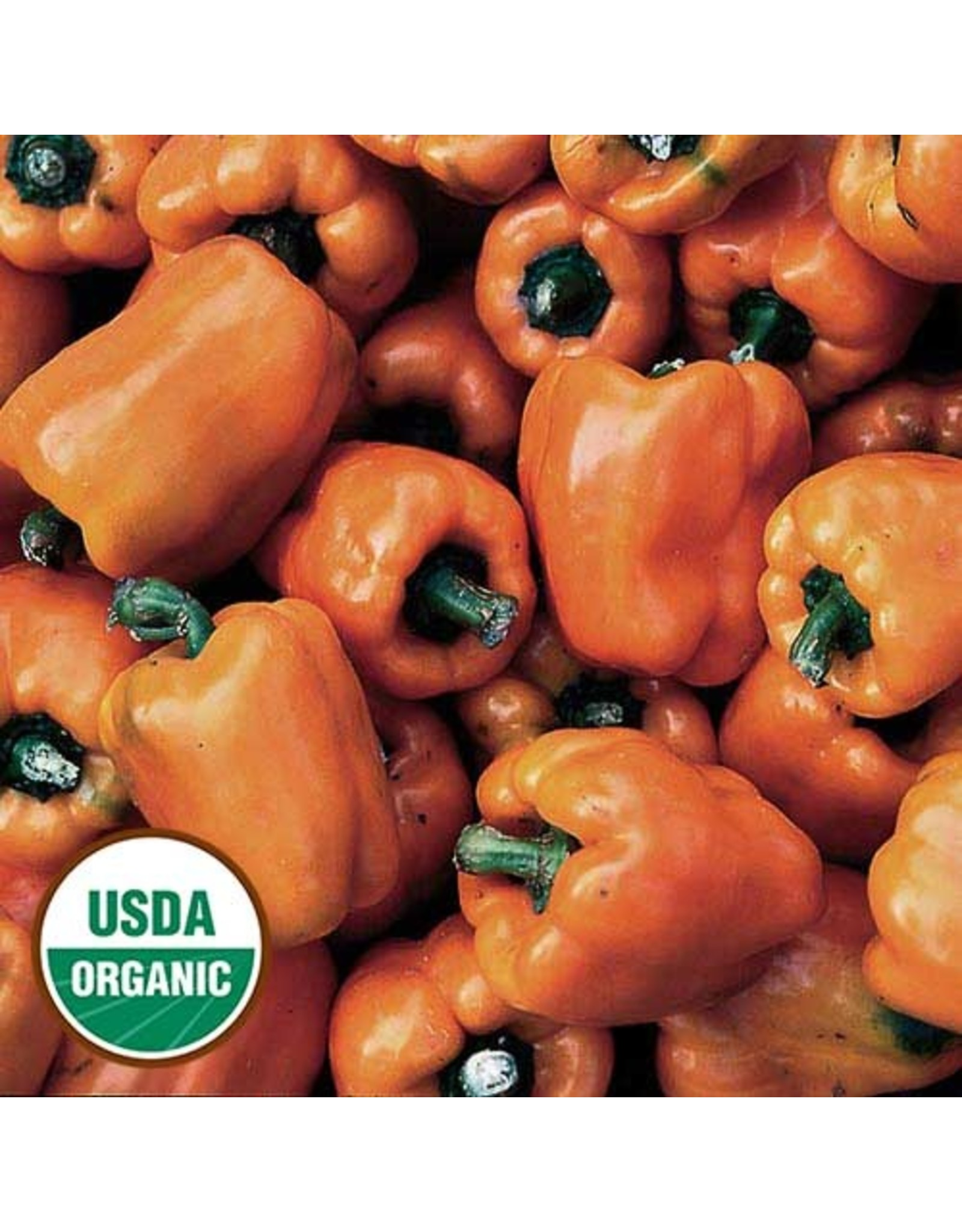 Seed Savers Pepper - Orange Bell