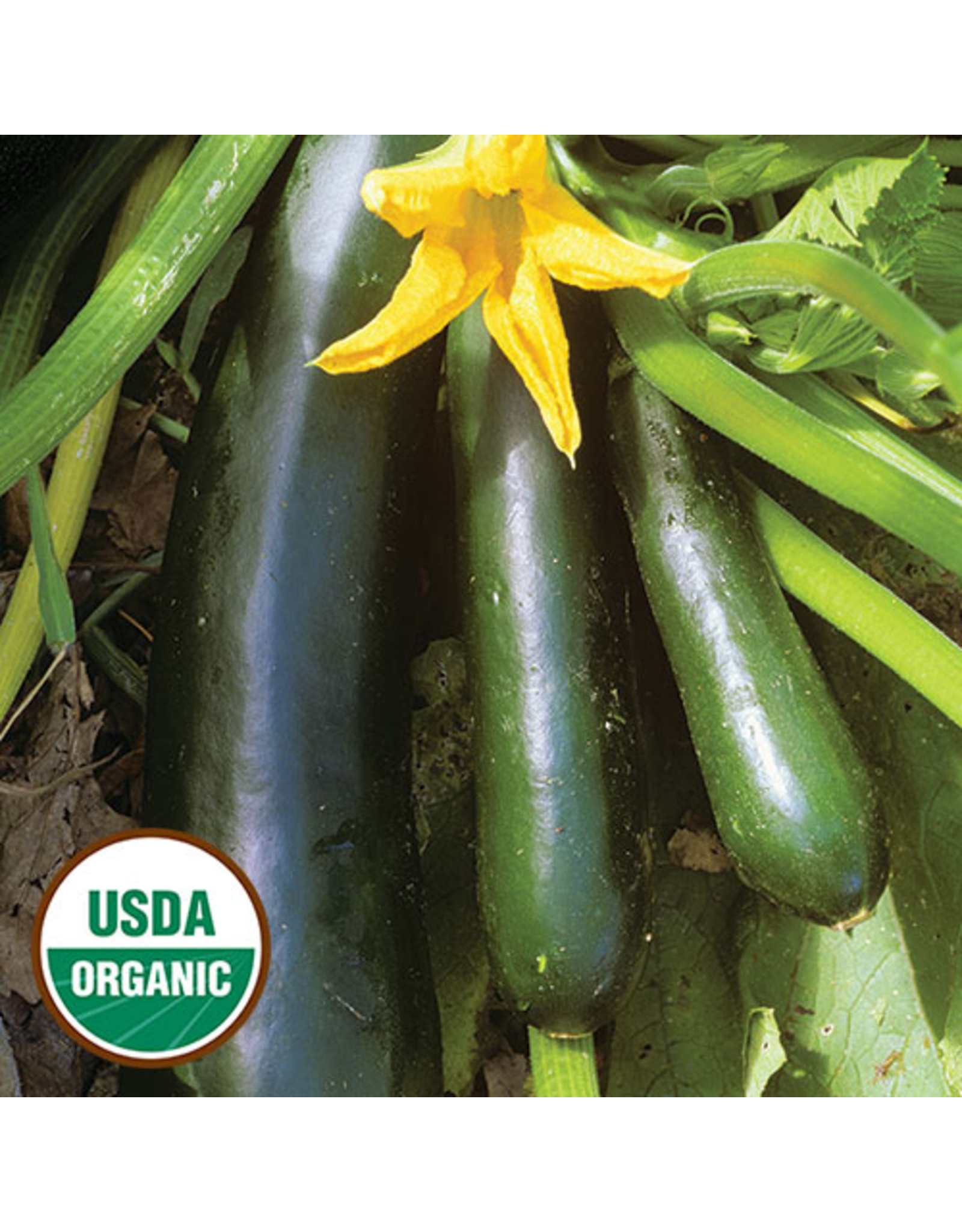 Seed Savers Squash - Black Beauty Zucchini