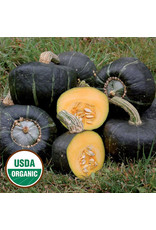 Seed Savers Squash - Burgess Buttercup