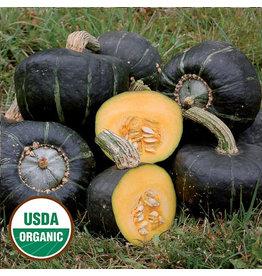Seed Savers Squash - Burgess Buttercup