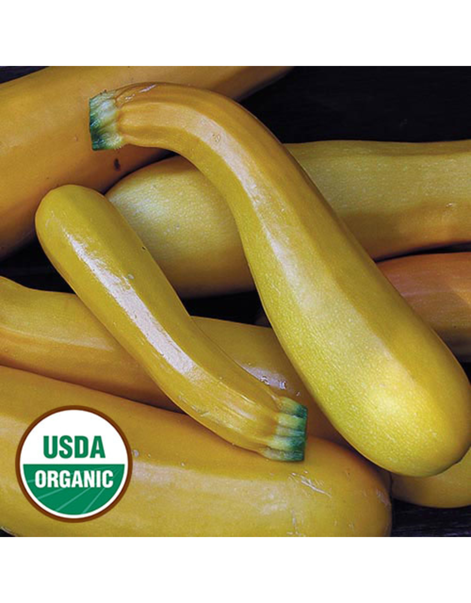 Seed Savers Squash - Golden Zucchini