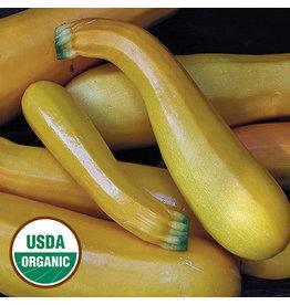 Seed Savers Squash - Golden Zucchini