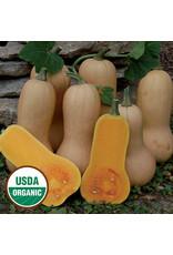 Seed Savers Squash, Wiltham Butternut OG