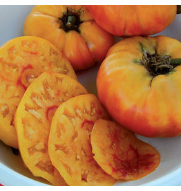 Seed Savers Tomato - Gold Medal
