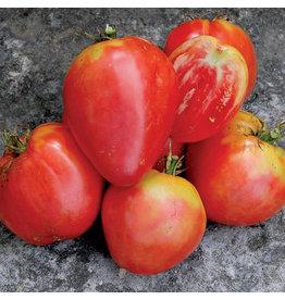 Seed Savers Tomato - Hungarian Heart