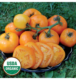 Seed Savers Tomato - Moonglow