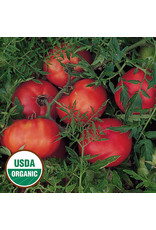 Seed Savers Tomato - Silvery Fir Tree