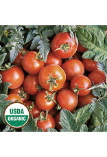 Seed Savers Tomato - Velvet Red