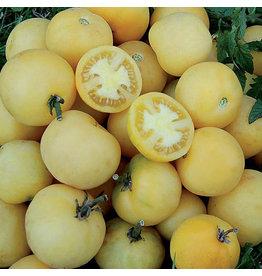 Seed Savers Tomato - Wapsipinicon Peach
