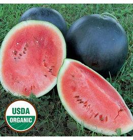 Seed Savers Watermelon - Blacktail Mountain