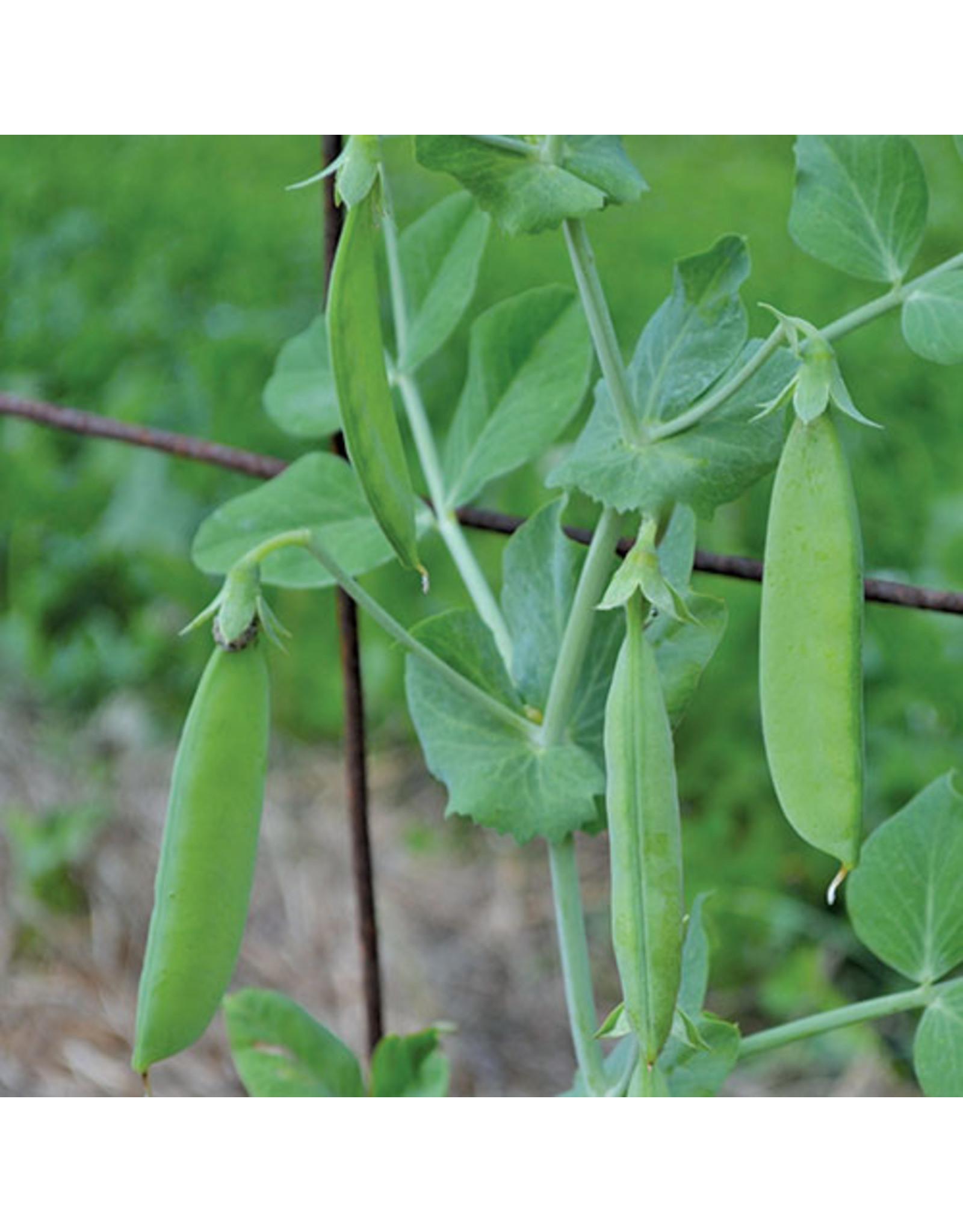 Seed Savers Pea - Sutton's Harbinger Pea