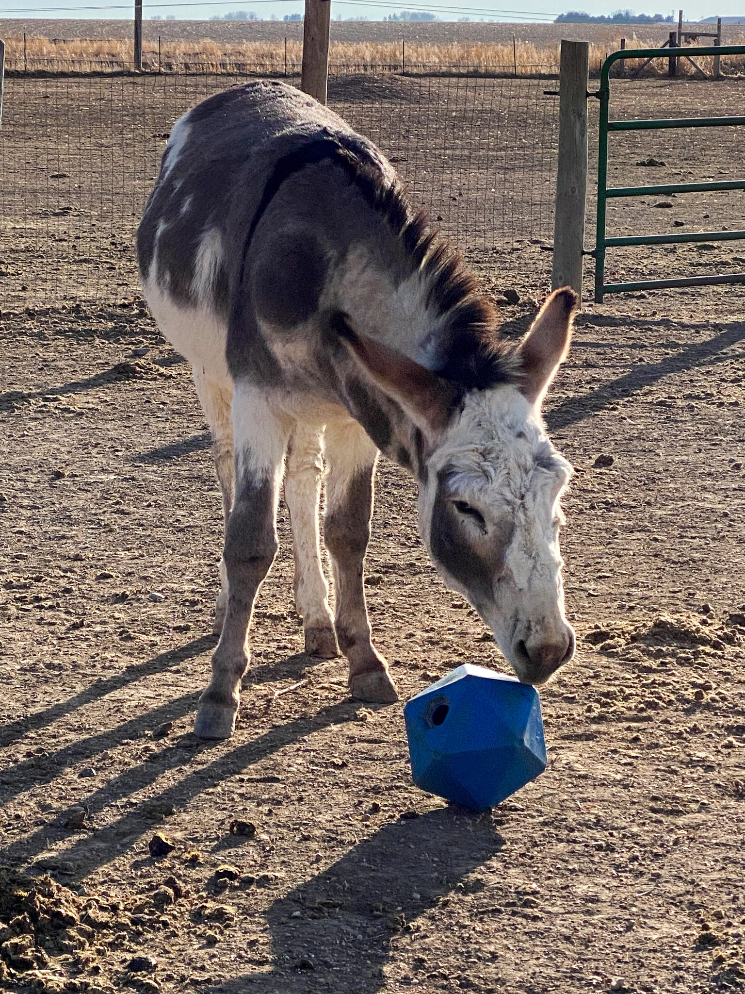 Boredom Busters - Best Horse Toys and Treats