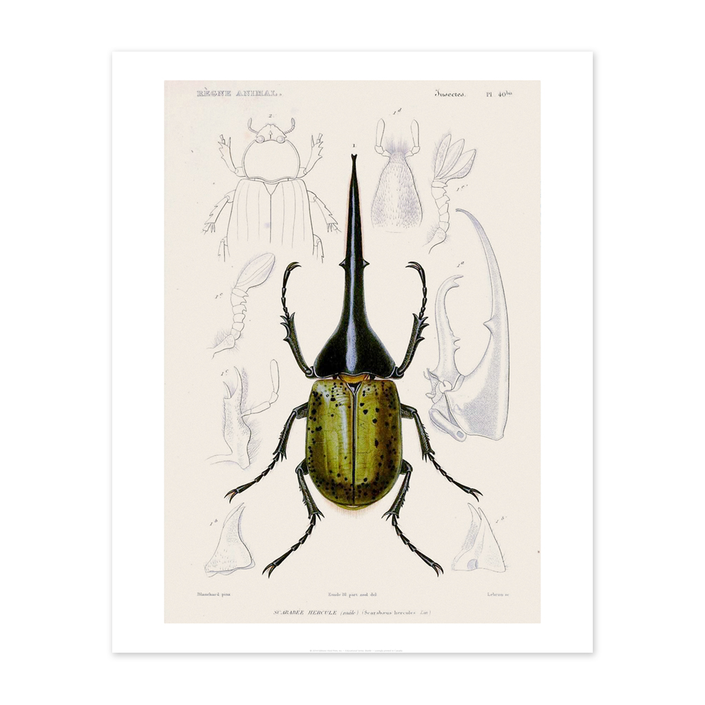 Bee Waeland Educational Series | Beetle