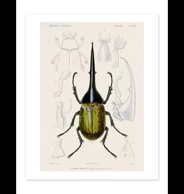 Bee Waeland Educational Series   Beetle