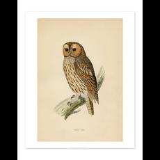 Bee Waeland Educational Series | Tawny Owl