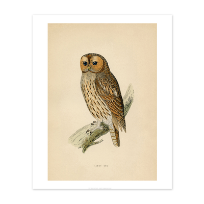 Bee Waeland Educational Series   Tawny Owl
