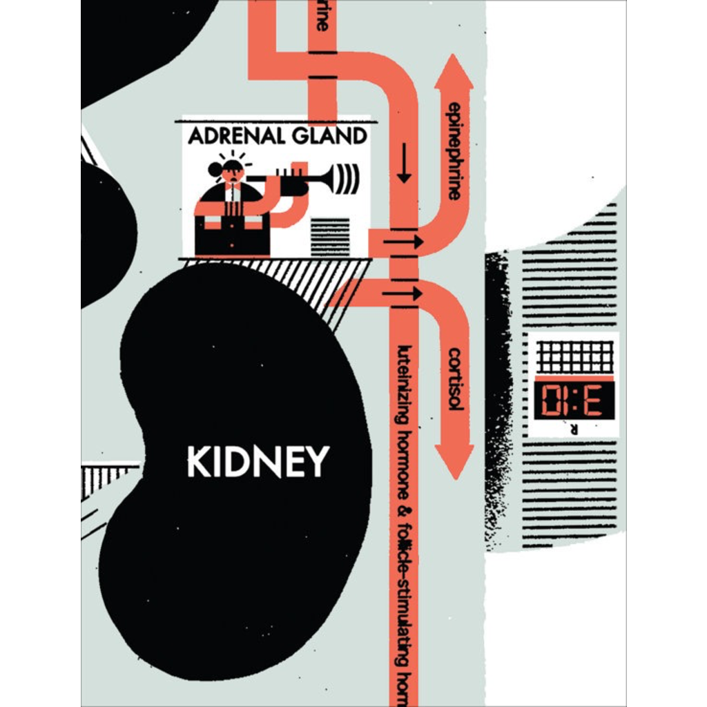 R. Biesinger Raymond Biesinger | Endocrine System Anatomy Chart
