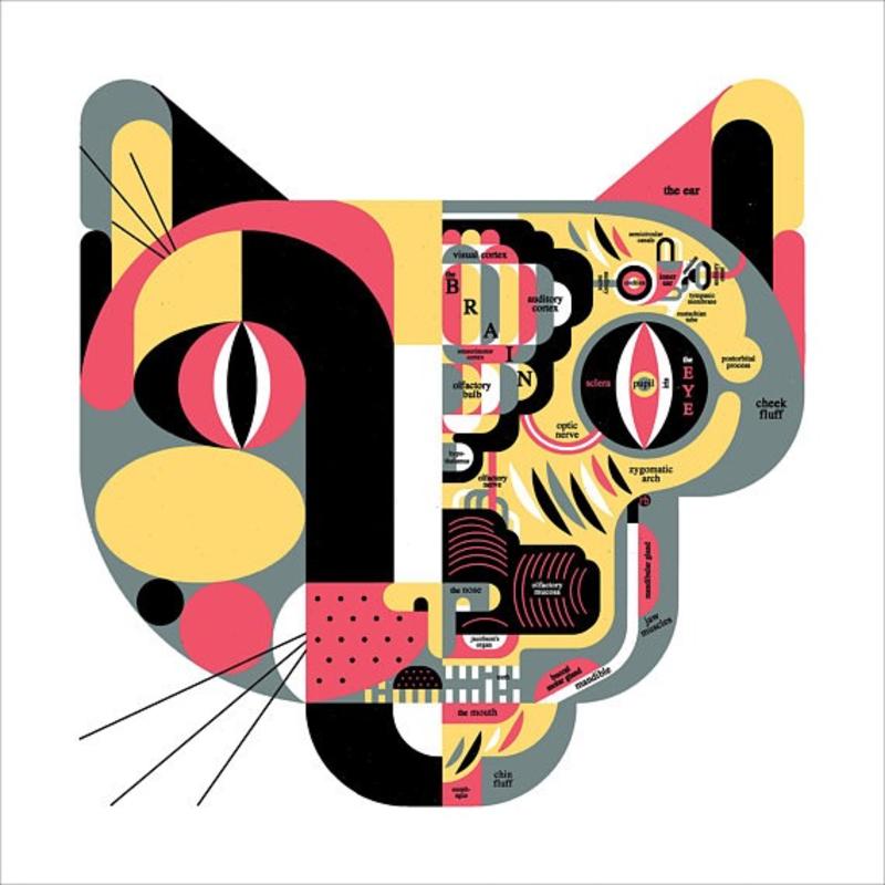 R. Biesinger Raymond Biesinger | Feline Anatomy