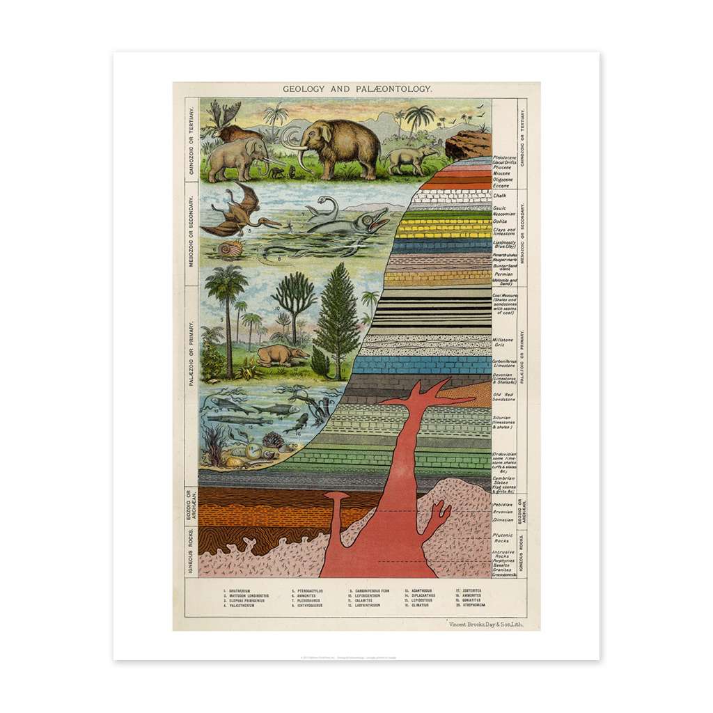 Bee Waeland Educational Series | Paleontology