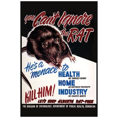 Vivid Print You Can't Ignore the Rat Postcard