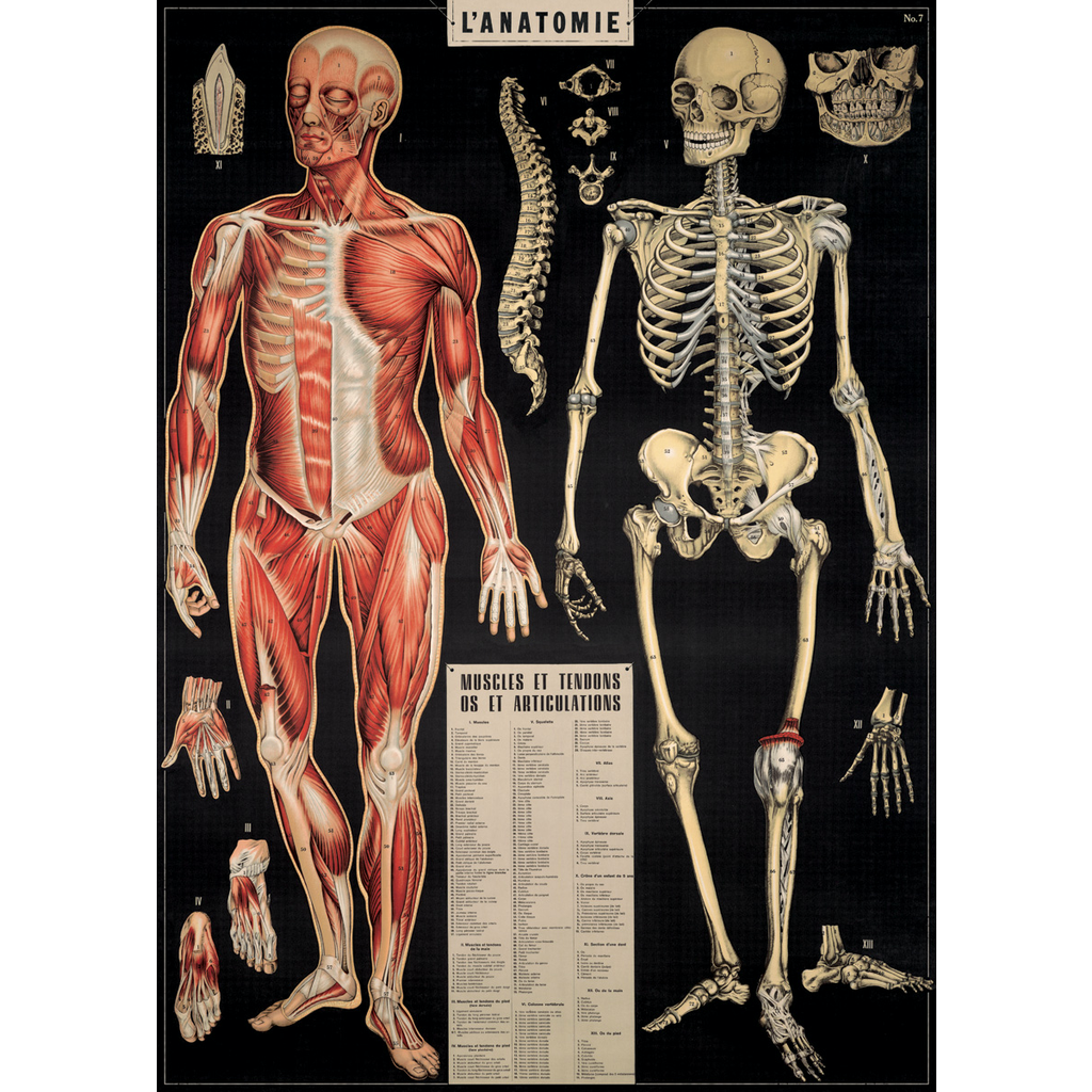 Cavallini L'Anatomie Wrap Sheet