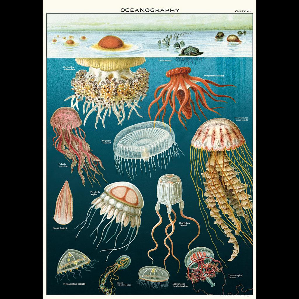 Cavallini Jellyfish Oceanography Wrap Sheet