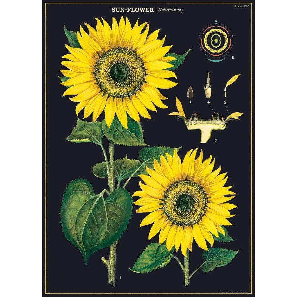 Cavallini Sunflower Wrap Sheet