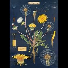 Cavallini Dandelion Chart Wrap Sheet