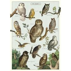 Cavallini Owl Chart Wrap Sheet