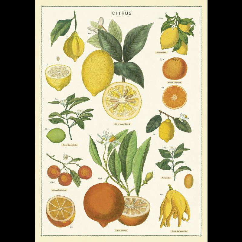 Cavallini Citrus Wrap Sheet