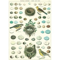 Cavallini Nest, Eggs & Birds Wrap Sheet