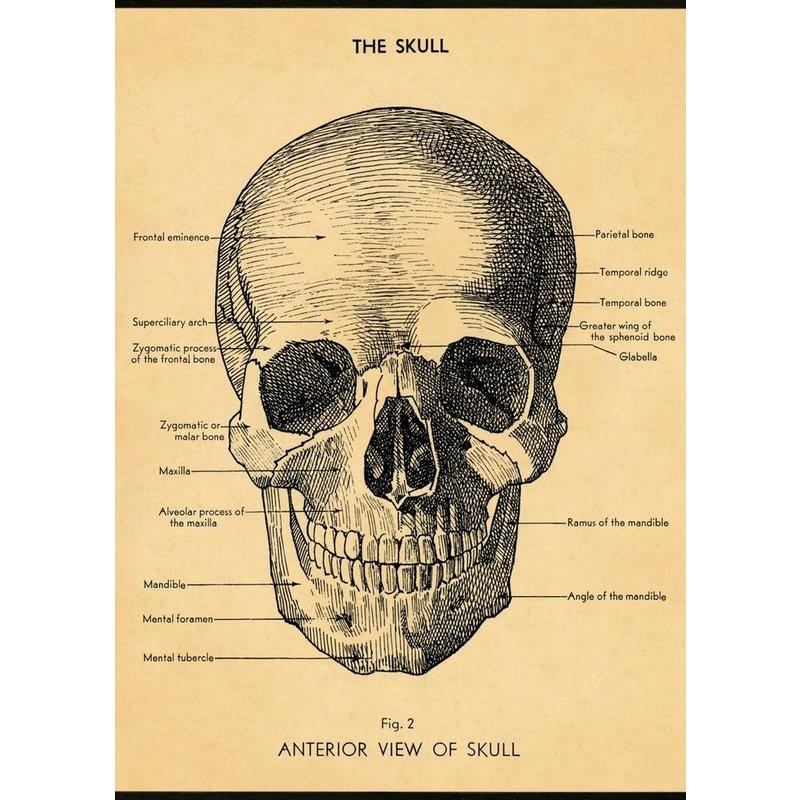 Cavallini The Skull Wrap Sheet