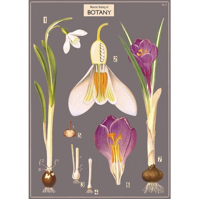 Cavallini Botany Chart Wrap Sheet