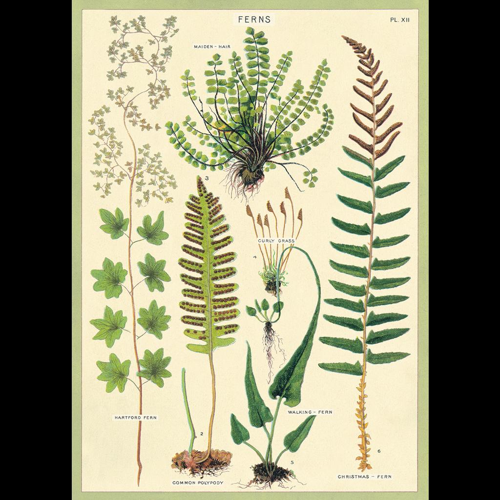 Cavallini Ferns Wrap Sheet