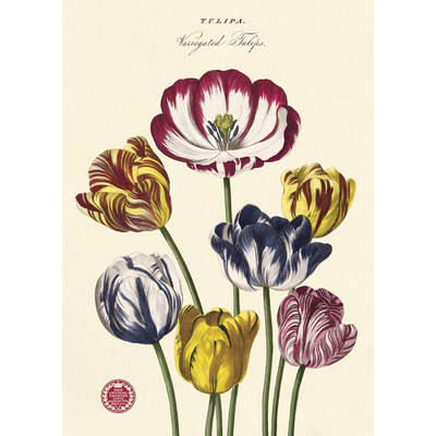 Cavallini Tulips 2 Wrap Sheet