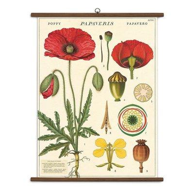 Cavallini Botany School Chart