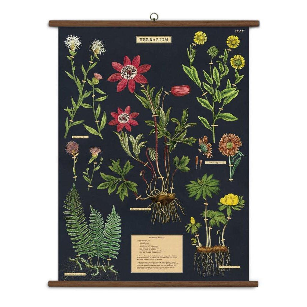 Cavallini Herbarium Vintage School Chart