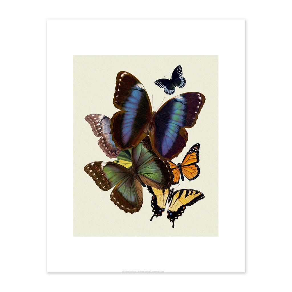 Bee Waeland Bee Waeland | Butterflies