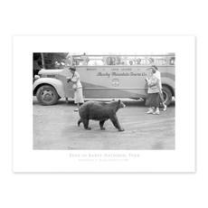 Vivid Archives Bear in Banff National Park 1950 Poster
